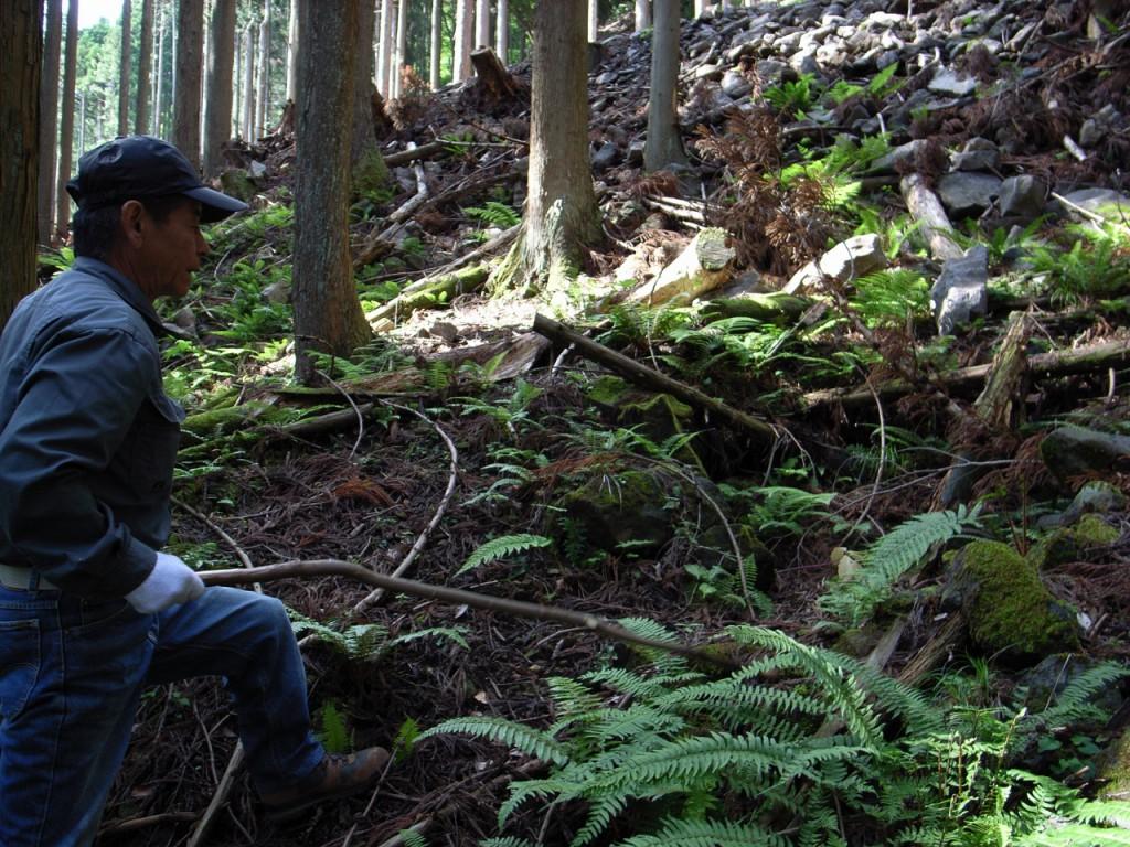 杉林の中には、炭焼き釜の後も