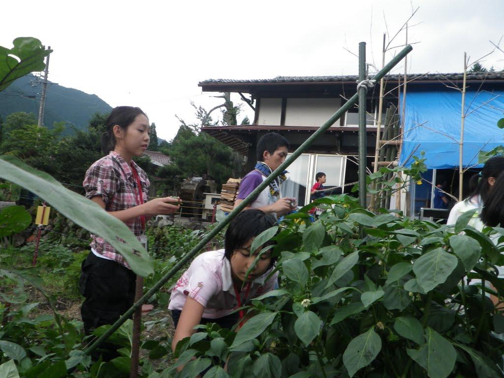 【過去のハイライト】畑の収穫体験