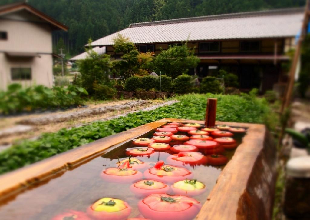 【過去のハイライト】収穫した野菜は郡上ならではの「水船」で冷やして、さらにおいしく