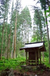 旧熊野権現と雷で枯れた木