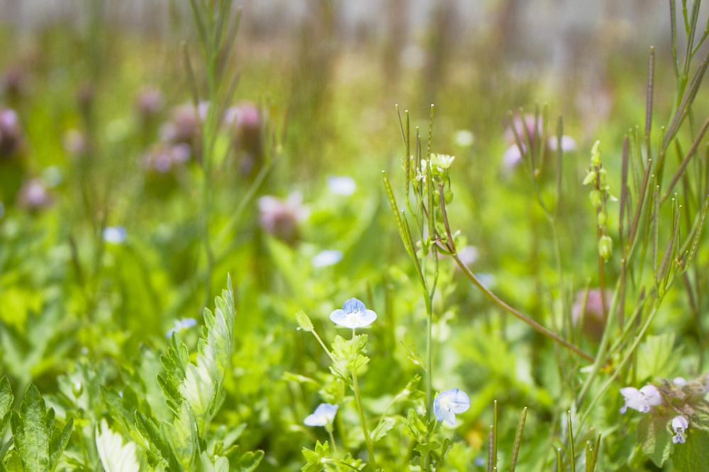 小さな草花もいっぱい